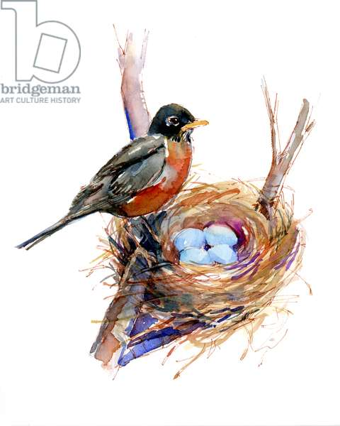 Robin with nest;2016, (watercolor)