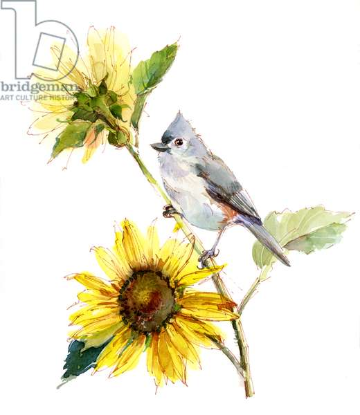 Titmouse with Sunflower, 2016, (watercolor)