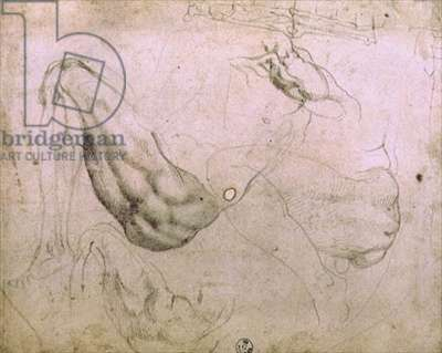 Sistine Chapel Ceiling (1508-12): sketches of the figure of Eve from the scene of The Original Sin (charcoal on paper)