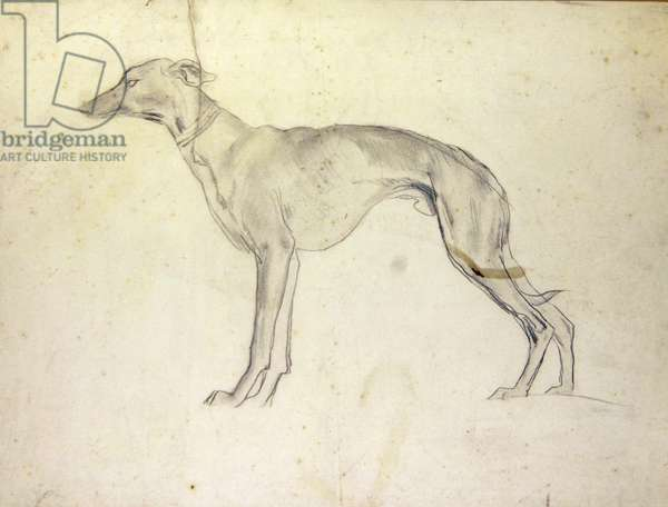 Whippet (pencil on paper)