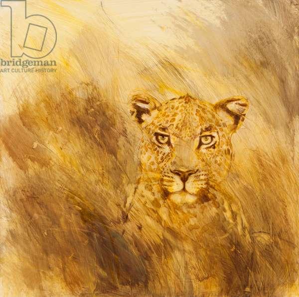 Leopard head, 2014 (oil on canvas)