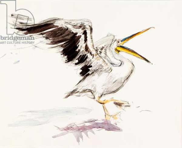 Pelican 1, 2015 (watercolour)
