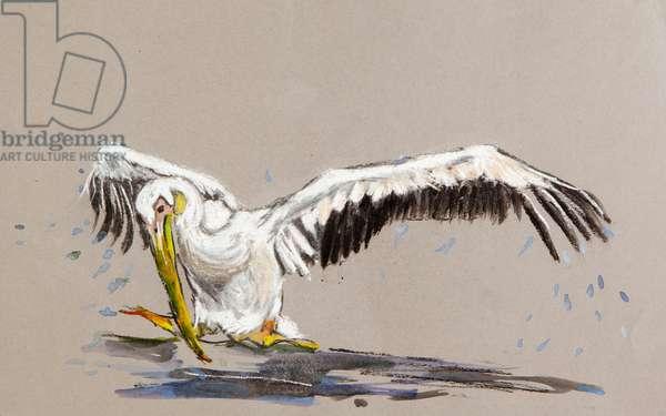 Pelican 2, 2015 (watercolour)