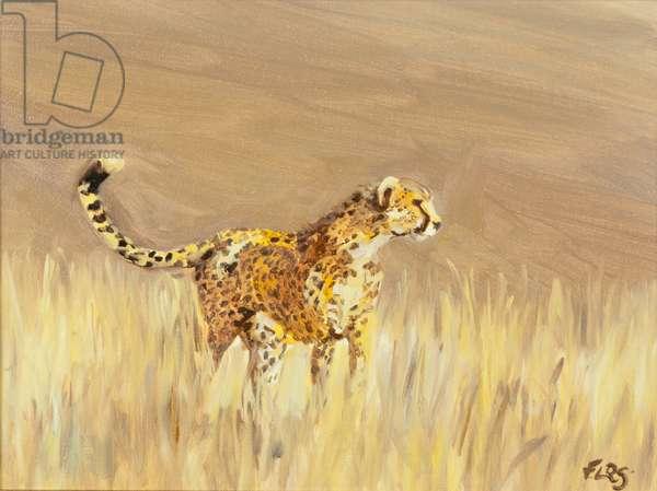 Cheetah study 1, 2015 (oil on canvas)