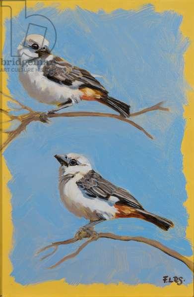 Weaver birds, oil on canvas, 2018