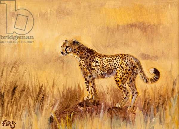 Cheetah in grass 1, 2013, (oil on canvas)