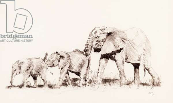 Elephant family, 2014 (pencil on paper)