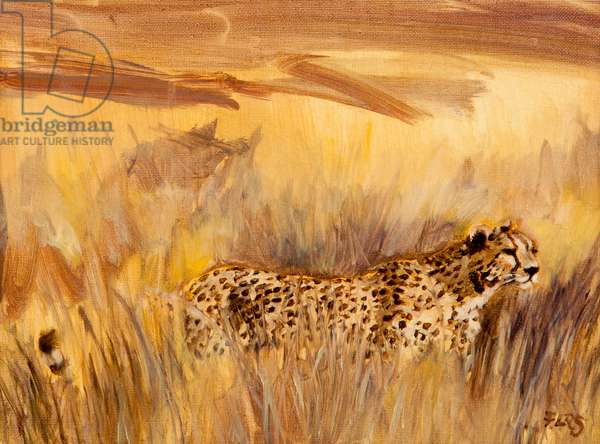 cheetah in grass 2, 2013 (oil on canvas)