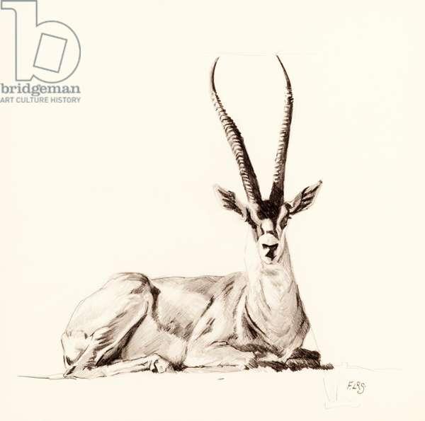Grant's Gazelle, 2012, (pencil on paper)