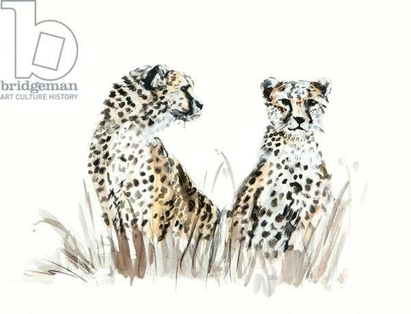 cheetah brothers, 2013, (watercolour)