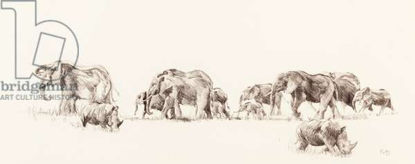 Elephant and Rhino, 2014, (pencil on paper)