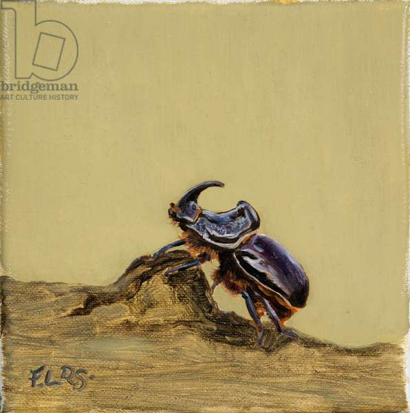 Rhino stag beetle 2019 (oil on canvas)