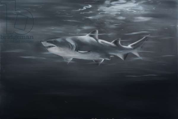 Sand Tiger Shark in monochrome, 2018 oil on canvas