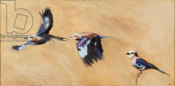 lilac breasted roller trio, 2015, (oil on canvas)