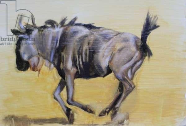 Wildebeest sketch, 2012, (oil on paper)