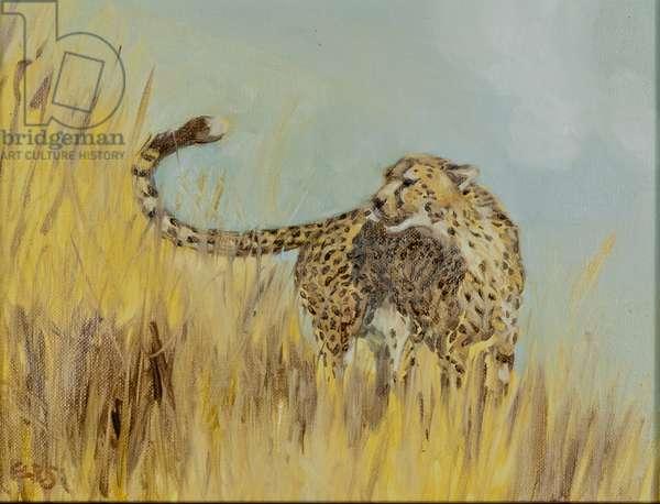 cheetah study 2, 2016, (oil on canvas)