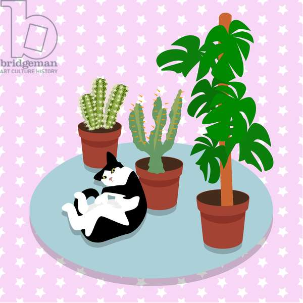 The Cat and the Cacti
