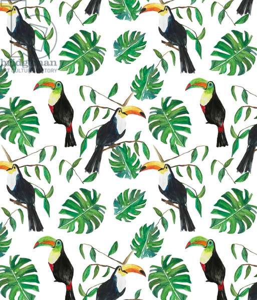 Toucan, 2017, (watercolour and gouache on paper)