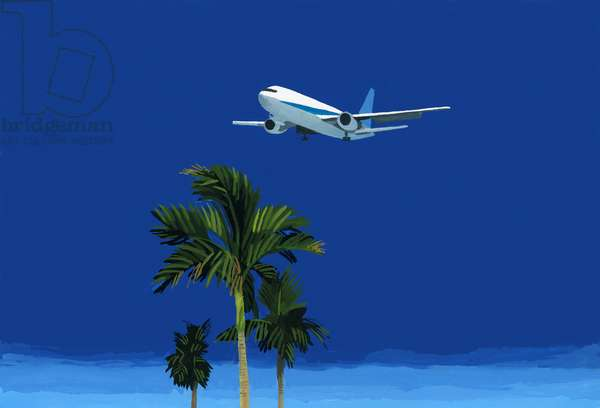 Airplane and palm tree