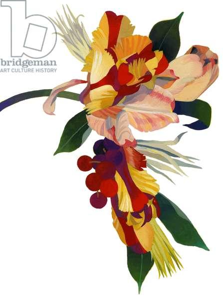 Tulip parrot1