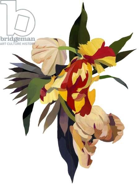 Tulip parrot2