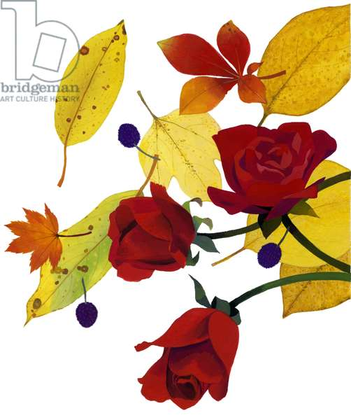 Autumn leaves and rose,