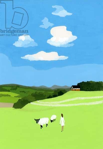 Prairie and sheep