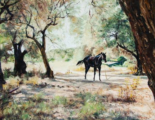 Black Horse in Clearing, Skiathos, Greece