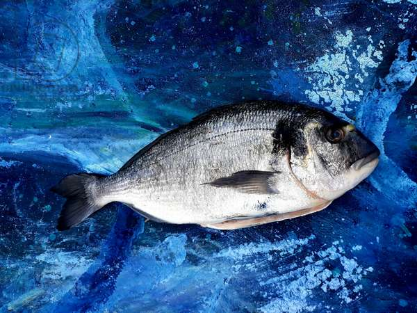 bream, fish, on canvas