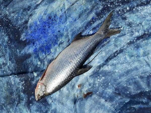 fish on canvas, 2019