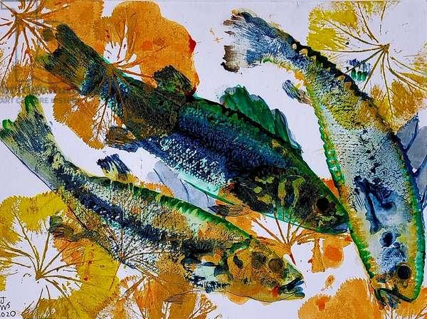 fish oils 2020