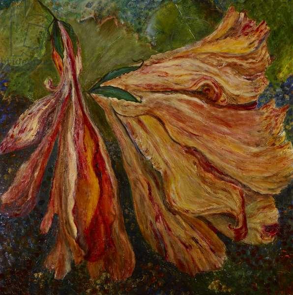 Hibiscus Wilt