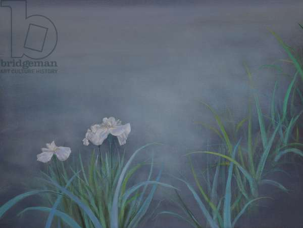 Irises at Night