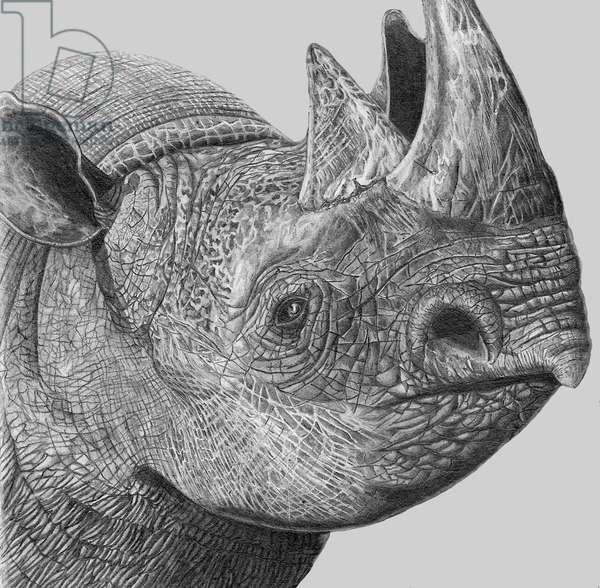 Rhino, 1990, (pencil)