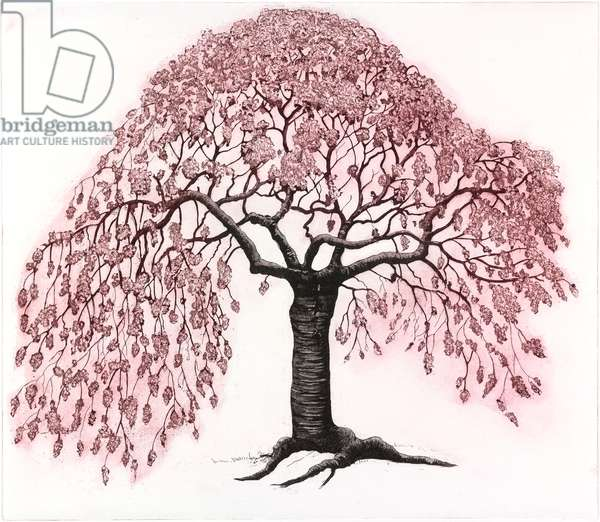 Spring Blossom, 2012, (etching/aquatint)