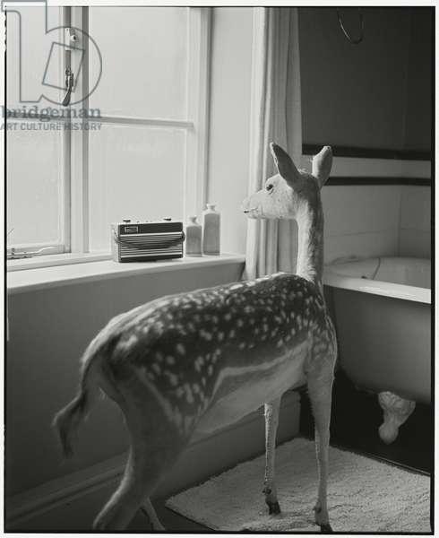 Deer in the Bathroom - 2, 2014, (photography)