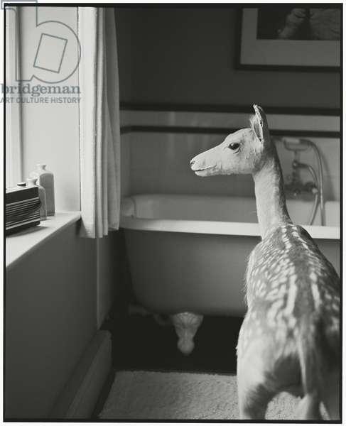 Deer in the Bathroom - 1, 2014, (photography)