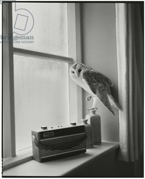 The Owl and the Radio, 2014, (photography)
