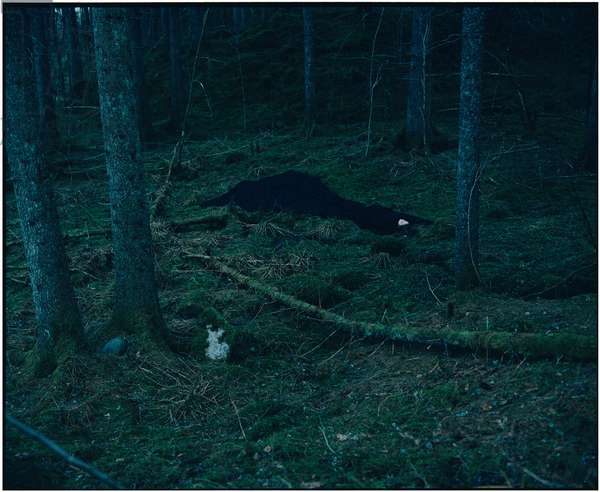 Body in Black in the Forest, 2017, (photography)