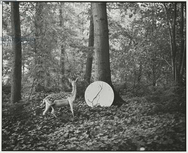 Deer and the Clock, 2014, (photography)