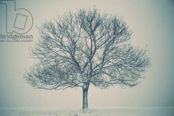 The Lonely Tree, 2013, (photography)