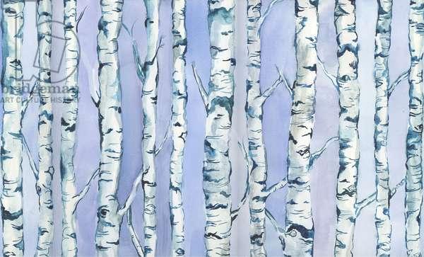 Silverbirch Forest