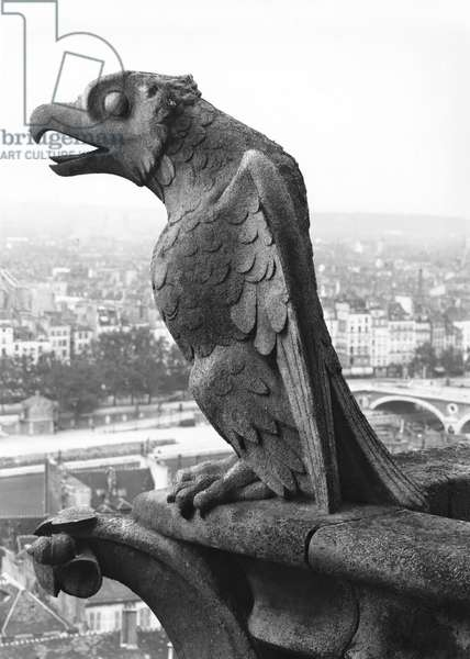 Gargoyle from the balustrade of the Grande Galerie of the west facade, replica of a 12th century original (stone) (b/w photo)