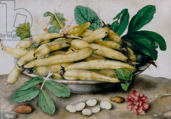 Plate of broad beans