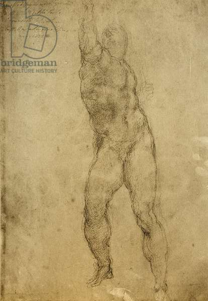 Nude study, drawing by Michelangelo. Gallerie dell'Accademia, Venice