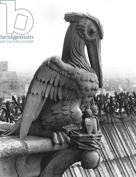 Pelican gargoyl from the balustrade of the Grande Galerie of the west facade, replica of a 12th century original (stone) (b/w photo)