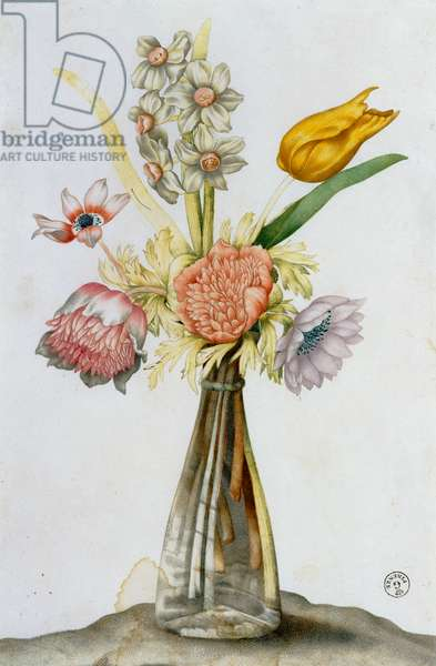 Glass vase with anemones, a narcissus and a tupil (watercolour)
