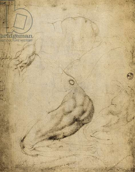 Anatomic study: drawing by Michelangelo preserved in the Room of Drawings and Prints, Uffizi Gallery, Florence.