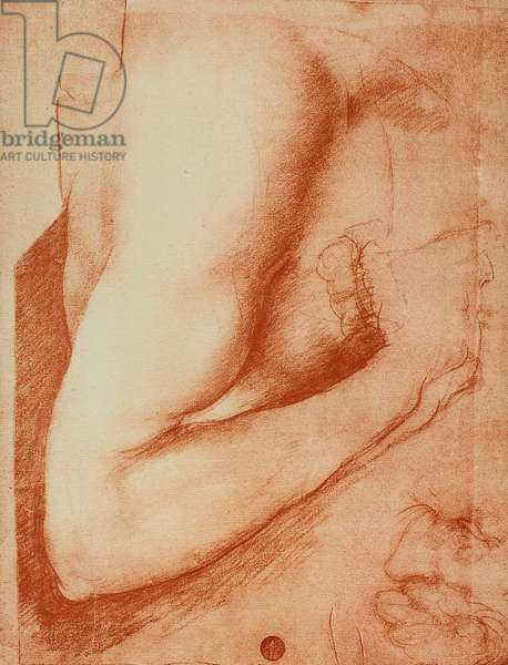 Sudy of an arm, drawing by Leonardo da Vinci. Gallerie dell'Accademi, Venice