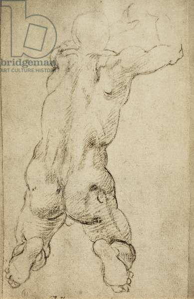 Study of a virile figure: drawing by Michelangelo. Casa Buonarroti, Florence